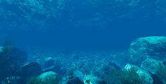Underwater World #Algae, #Animix, #Background, #Coral, #Depth, #Elements, #Fish, #Reflection, #Refraction, #ScubaDiving, #Shoals, #Underwater, #Water, #Wave, #WorldStone http://goo.gl/DyL63C