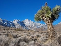 Owens Peak is located less than 25 miles from Santiago Ridgecrest Estates. It is the highest point in the southern portion of the Sierra Nevada Mountains.