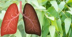 9 Plantas y hierbas que reparan daños pulmonares combaten las infecciones y aumentan la salud pulmonar #salud