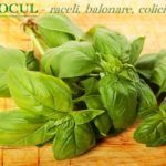 Postul de miercuri si vineri | La Taifas Alba, Spinach, Vegetables, Plant, Vegetable Recipes