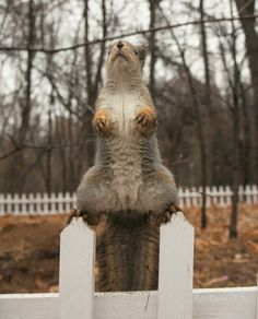 """""""If I stand real still, they'll think I'm a finial on the fence."""" ~ lol! B33Happy *^-^*"""