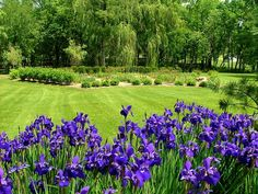 Top 10 Best Perennials for Your Garden - Page 7 of 10 - Top Inspired