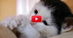 The Cute…It's Too Much. Meet Pancake, The Cutest Kitten Of All Time | The Animal Rescue Site Blog