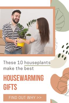 These 10 types of houseplants are great housewarming gift ideas. Each of these indoor plants symbolize change, growth, good fortune and abundance - everything new homeowners will benefit from. We've also included tips on where to place houseplants in their new home for good luck and plant care tips. A housewarming gift the will literally grow with the owners. Air Plants, Indoor Plants, Types Of Houseplants, Best Housewarming Gifts, Low Light Plants, New Homeowner, Plant Care, Abundance, House Warming