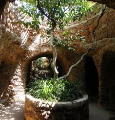Trees grow underground in this 'ancient network' of Californian Catacombs.