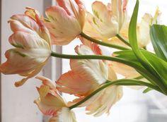 keiko goke's tulips