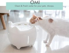 Just like humans, cats and dogs also need clean water. Thanks to OMI, you are going to have an easier time taking care of your pet. It is a self-cleaning Cat Water Fountain, Pet Feeder, Animals And Pets, Your Pet, Dog Cat, Cleaning, Cats, Gadgets, Tower