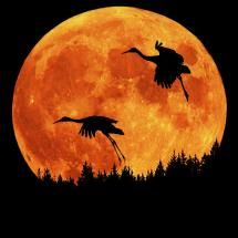Sandhill Cranes and full moon rising against skyline; Posted by: quest4tvl5a