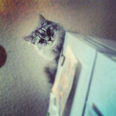 I see youuuu :)