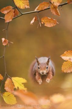 Ecureuil - Run Forest... 飛んでる!と思ったけど、走ってるそうです。