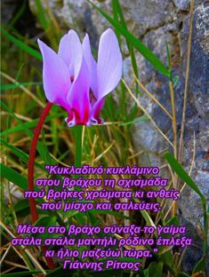Greek Quotes, Good Morning, Plants, Buen Dia, Bonjour, Plant, Good Morning Wishes, Planets