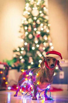 christmas dog wrapped in lights