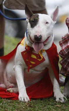 Собака-Супермен