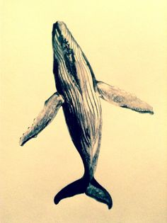 Pencil drawing of a whale