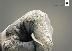 野生動物に手を差し伸べて。