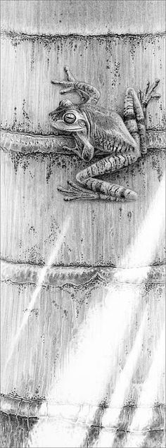 Gary Hodges drawings of reptiles and amphibians