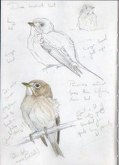 Sketchbook Inspiration, Art Sketchbook, Bird Drawings, Animal Drawings, Animal Sketches, Art Sketches, Bird Artwork, Bird Paintings, Bird Artists