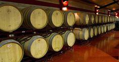 El director general de Medio Ambiente, Ricardo Riquelme, ha visitado la última bodega que se va a adherir a la Denominación de Origen Vinos de Madrid a petición de su Consejo Regulador.