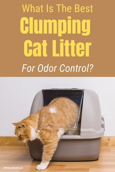 Discover some of the best litter for odor control including natural and eco-friendly brands. #whatisthebestclumpingcatlitter #catcareproducts #bestcatlitterfortracking Best Cat Litter, Litter Box, Cat Tracker, Cat Scratching Post, Cat Stuff, Cat Life, Cool Cats, Fur Babies
