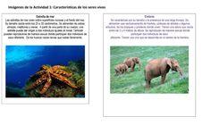 Educación Primaria: Secuencia didáctica. Características y clasificación de los seres vivos