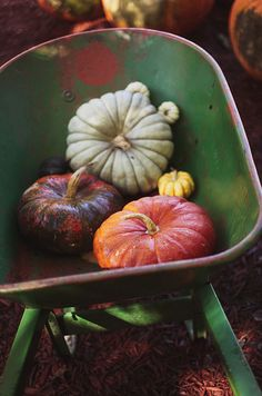 Blue Jarradale and Cinderella pumpkins...both heirloom varieties