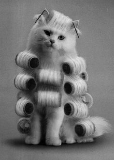 Kitty day at the spa!