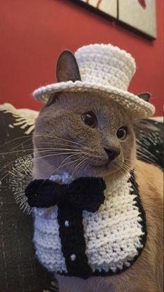 Crochet Dog Patterns, Crochet Designs, Crochet Dog Clothes, Crochet Hats For Cats, Cats In Hats, Kawaii Crochet, Cat Bow Tie, Cat Bandana, Fancy Cats