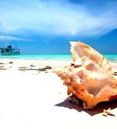 Isla La Tortuga, uno de los destinos más privilegiados de Venezuela, donde sus aguas cristalinas, arena blanca y sol radiante, te invitan a tener una experiencia del sol y playa sin precedentes.