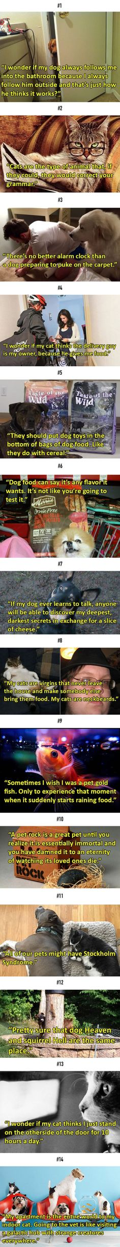 Animal Pictures and Photos: 14 Shower Thoughts That Perfectly Sum Up Pets