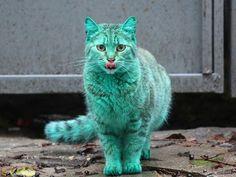 Il gatto tutto verde
