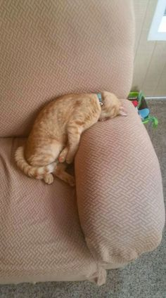 Our cat is my Monday spirit animal. Cute Cats And Kittens, I Love Cats, Crazy Cats, Cool Cats, Kittens Cutest, Cute Funny Animals, Funny Animal Pictures, Cute Baby Animals, Funny Cats