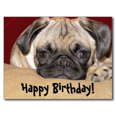 Adorable iCuddle Pug Puppy Pillow Case by Admin Store - CafePress Birthday Pug, Birthday Wishes, Birthday Ideas, Cute Pug Puppies, Cute Pugs, Brindle Pug, Dog Training Techniques, Aggressive Dog, Pug Love