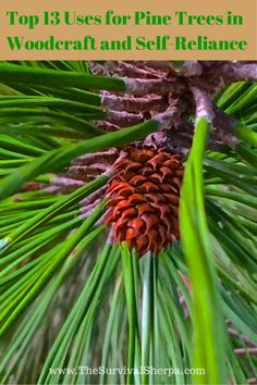 13 uses for pine trees in woodcraft and self reliance