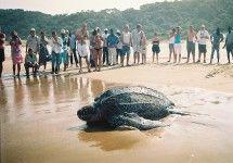 Turtle Tours in KwaZulu-Natal with Thonga Beach Lodge. #dirtyboots #turtletours #kzn