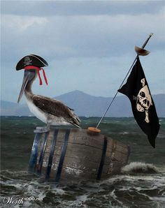 pirates - and he were another pet we had on board - till the parrot quarrelled with him and marooned him one day while we weren't looking ....