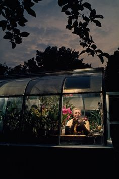 An amateur orchid grower works in the window of his greenhouse in Silver Spring, Maryland, April 1971.