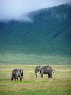 Elephants in Ngorongoro Crater - photo by: Geof Wilson, Source: Flickr, found with Wylio.com
