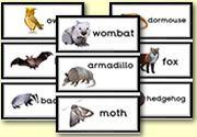 Flash Cards - Nocturnal Animals