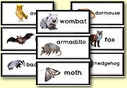Flash Cards - Nocturnal Animals