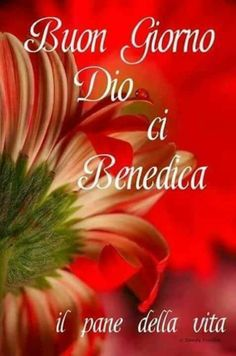 Italian Phrases, Praise And Worship, Beautiful Birds, Good Morning, Cristiani, Dolce, Phrases In Italian, Inspiration Quotes, Messages