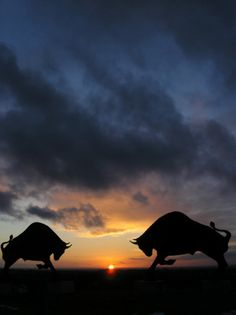 Bulls,  Meeting at Sundown to Battle instead of the heat of the Day.!