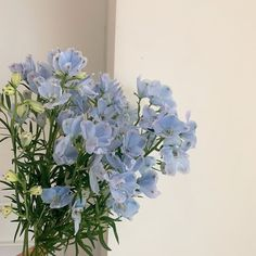such a flower hoe these days Light Blue Aesthetic, Blue Aesthetic Pastel, Aesthetic Colors, Flower Aesthetic, Aesthetic Photo, Aesthetic Pictures, Nature Aesthetic, Japanese Aesthetic, Japanese Style