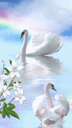 Flying Jewels, God`s Awesome & Gorgeous Creation. Beautiful Swan, Beautiful Birds, Beautiful Images, Swan Drawing, Swan Animal, Cute Pastel Wallpaper, Bird Gif, Lake Pictures, Romantic Gif