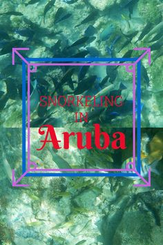 Snorkeling in Aruba! An amazing place to see tropical fish right below the surface of the water. Read more: http://justinpluslauren.com/caribbean-cruise-snorkeling-in-aruba/