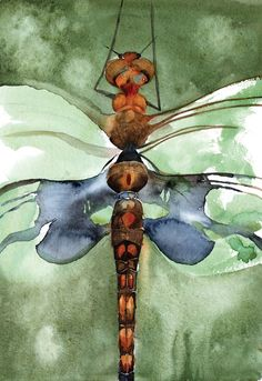 Dragonfly Study - Limited Edition Print – Roderick MacIver Arts