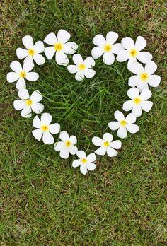 9865414-Lan-Thom-bianchi-a-forma-di-cuore-fiori-sul-prato--Archivio-Fotografico.jpg (880×1300)