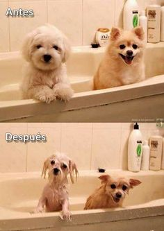 Washed dogs