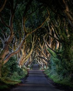 The Dark Hedges, I have to see this when we go to Ireland! Photo by Bryan Hanna Irish Landscape Photography Beautiful Streets, World's Most Beautiful, Beautiful World, Beautiful Places, Beautiful Scenery, Places Around The World, Around The Worlds, Game Of Thrones, Photos Originales