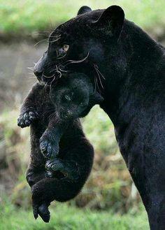 este animal es muy hermoso!!!!