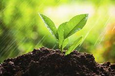 Giardinaggio: le tecniche di propagazione  Corsi gratuiti di giardinaggio  per info. www.anconaflowershow.com